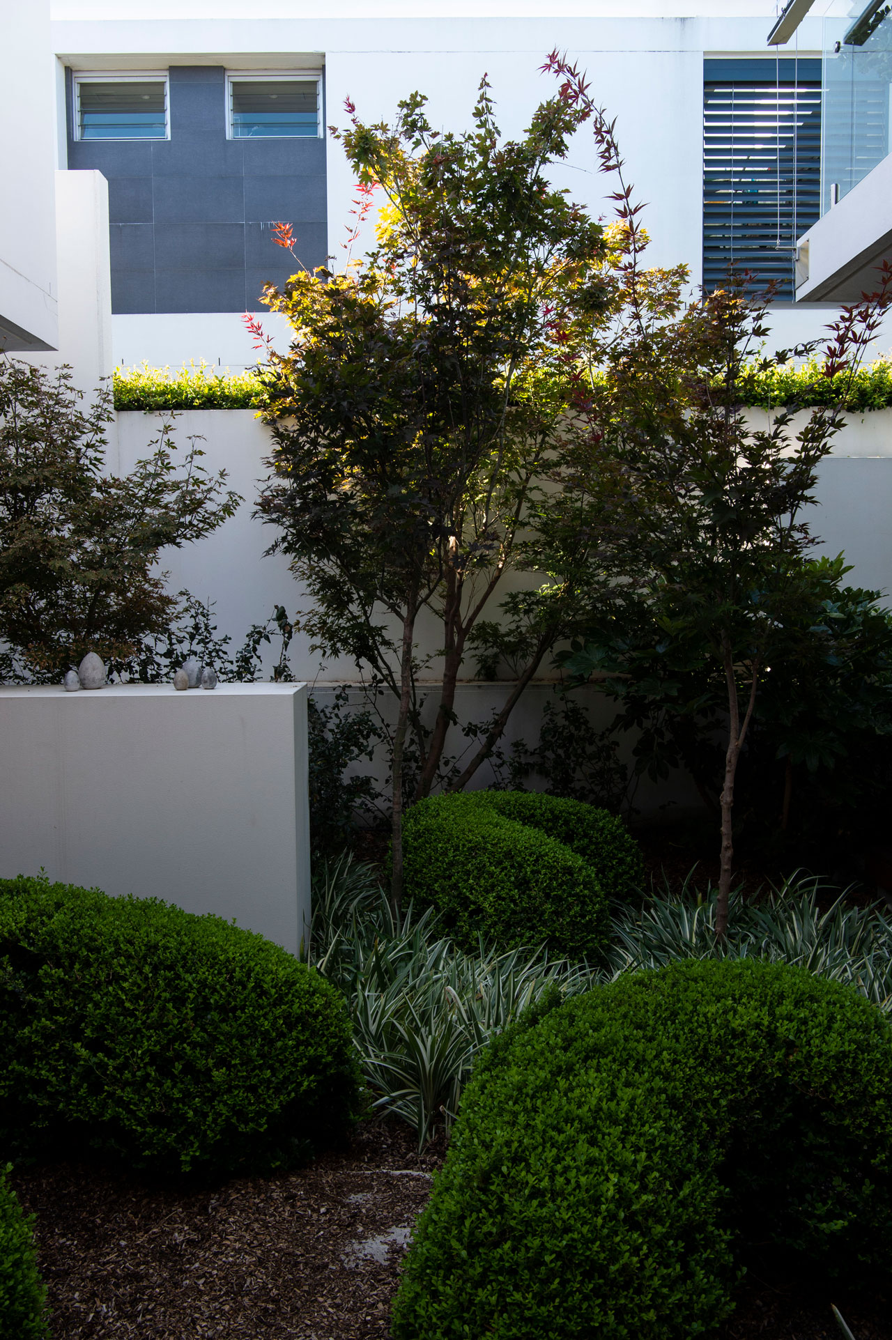 Catt - Mosman Urban Garden - Michael Cooke Garden Design